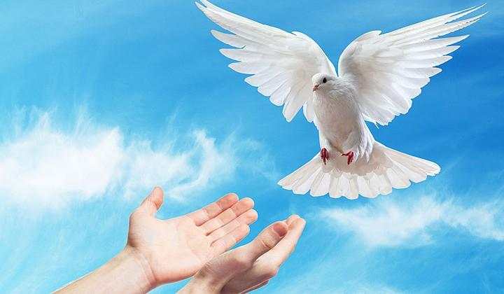 Открытка голубь в руках