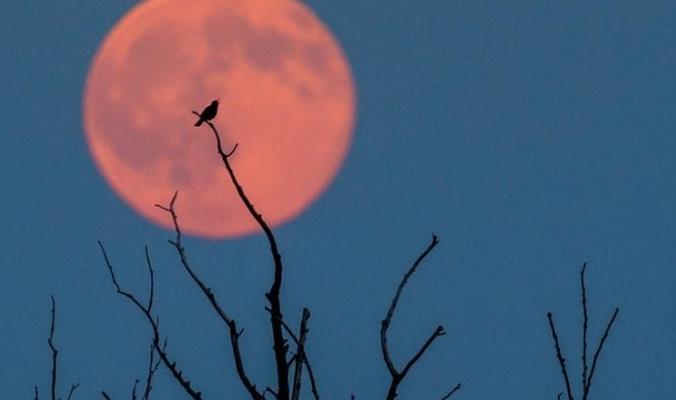 Розовая луна | ТБН